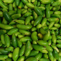 Buy Organic Kovakkai /  Ivy Gourd Pack of 1 Kg Online In Chennai