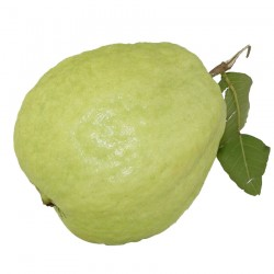 Guava Pack of 1 KG